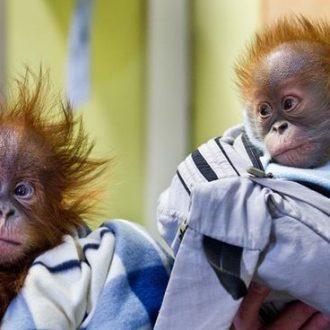 Amazon Wishlists Used to Help Monkeys in Need.