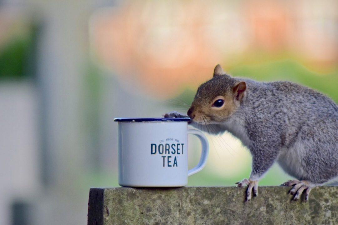 Everyone loves a cup of Dorset Tea